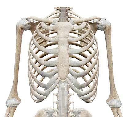肋骨が出ている